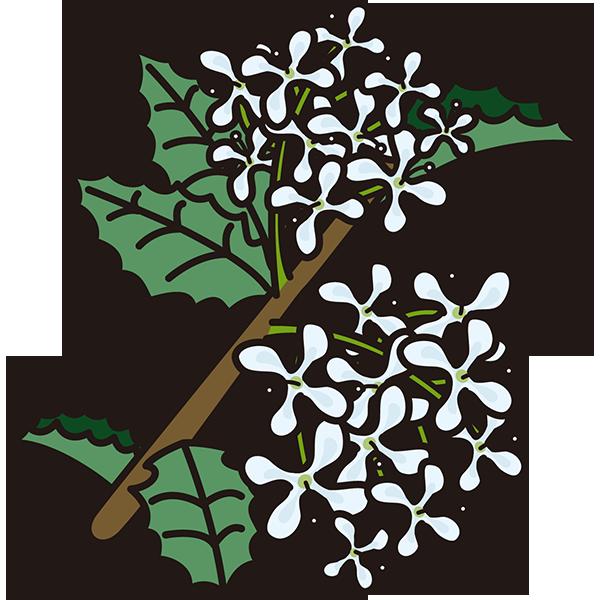植物 ヒイラギ(ブルー)(カラー)
