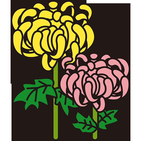 植物 菊(黄色とピンク)(カラー)