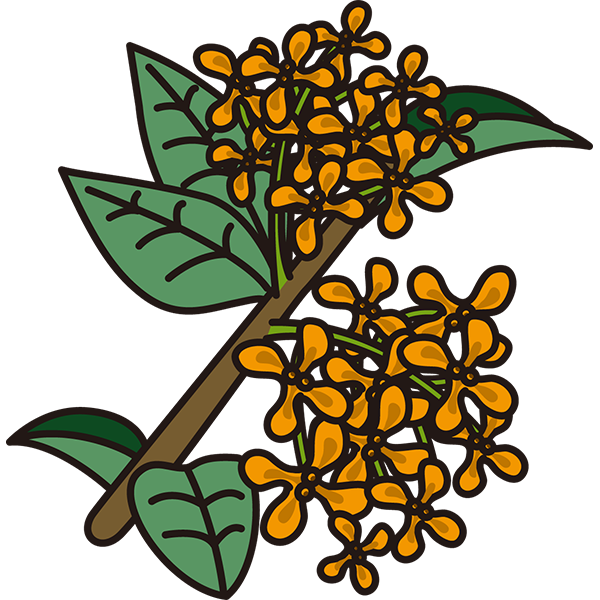 植物 キンモクセイ(黄色)(カラー)