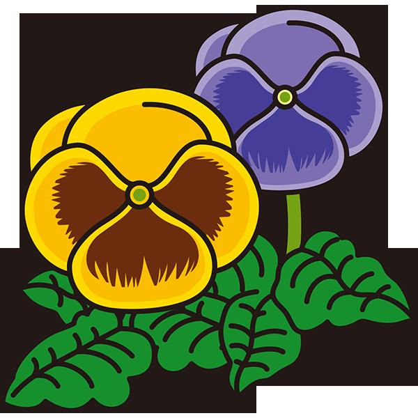 植物 パンジー(黄色×紫色)(カラー)