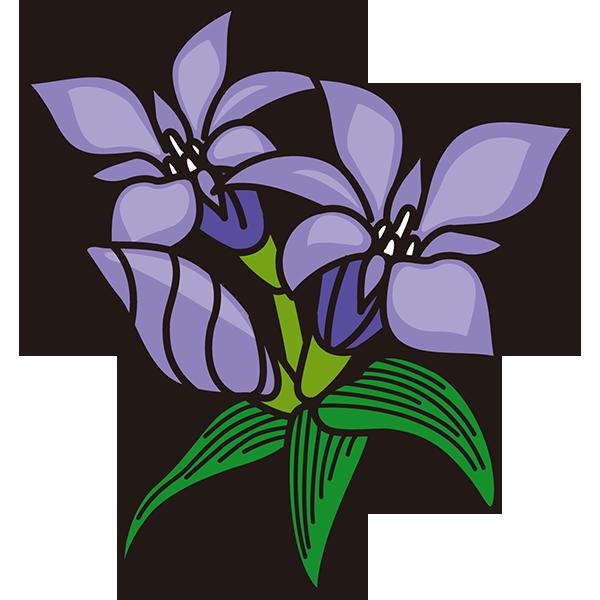 植物 リンドウ(紫色)(カラー)