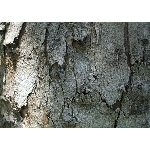 背景画像 とても荒い木目模様のテクスチャ(カラー)