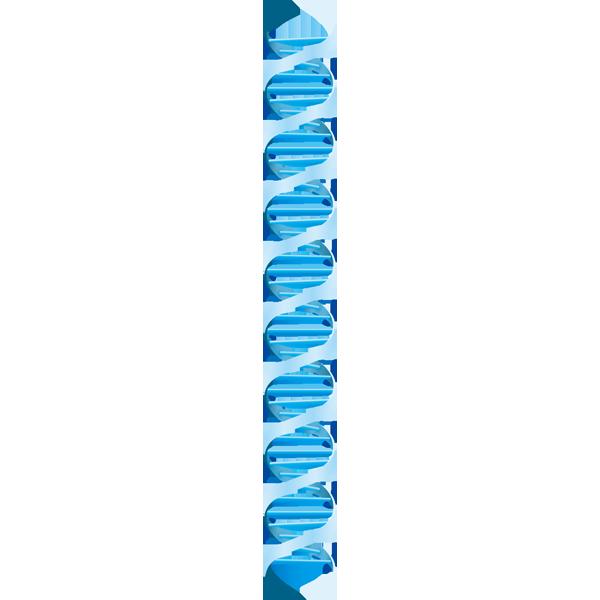 医療 DNA(遺伝子)(カラー)