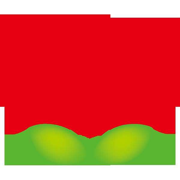 年中行事 梅の花(カラー)