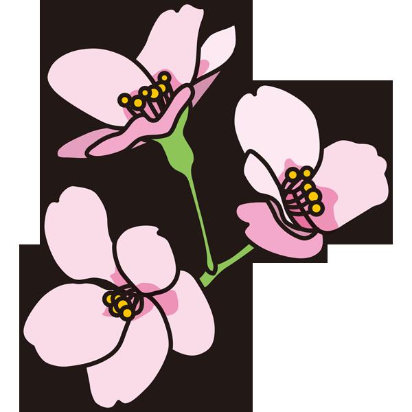 年中行事 桜の花(カラー)