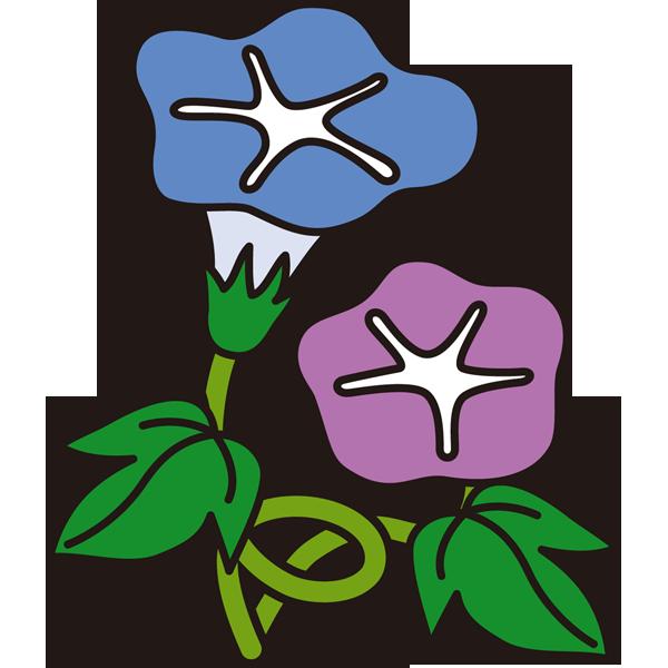 植物 あさがお(カラー)