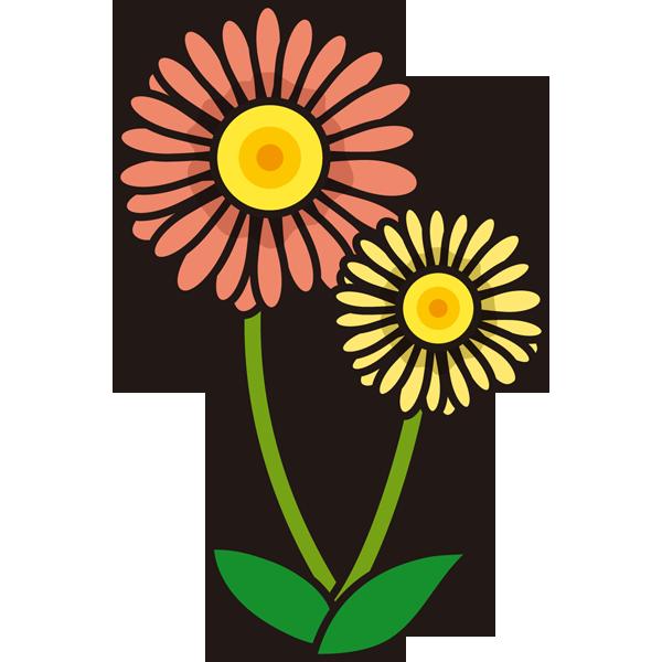 植物 ガーベラ(オレンジ色)(カラー)