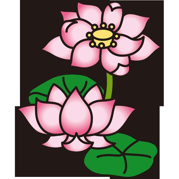 植物 蓮(ハス)(カラー)