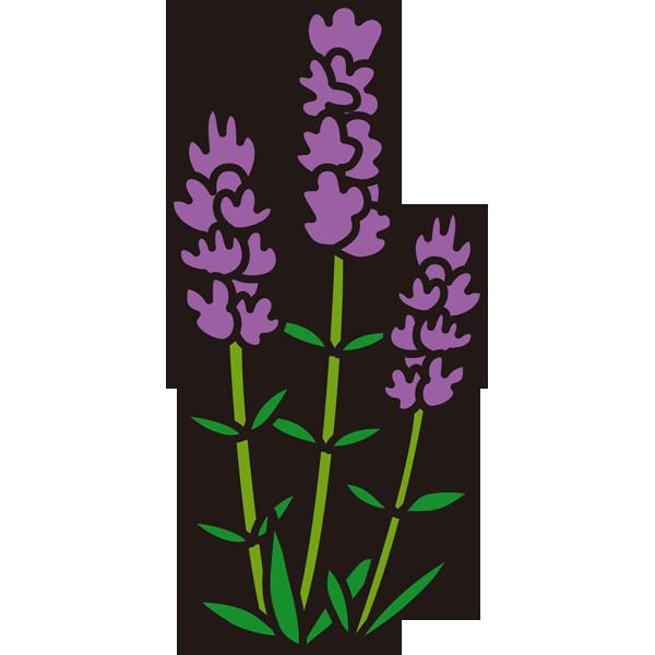 植物 ラベンダー(カラー)