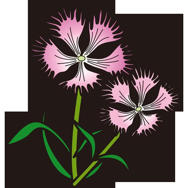 植物 なでしこ(ピンク色)(カラー)