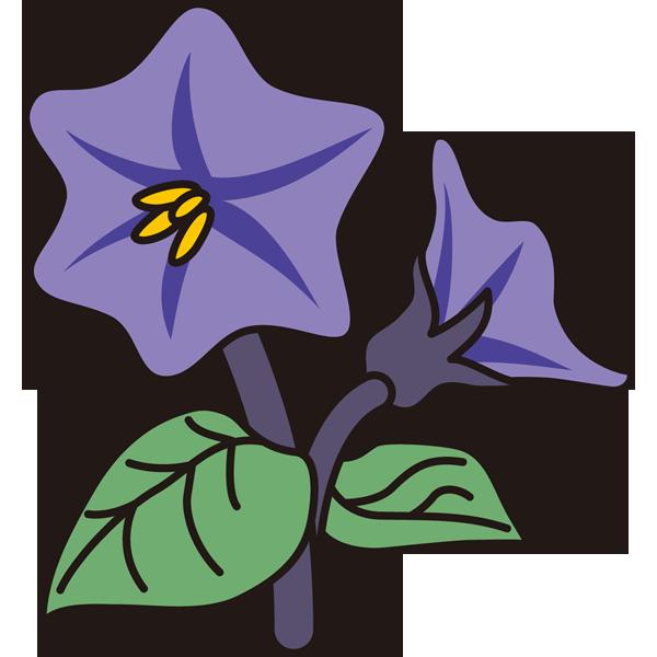 植物 なすの花(カラー)
