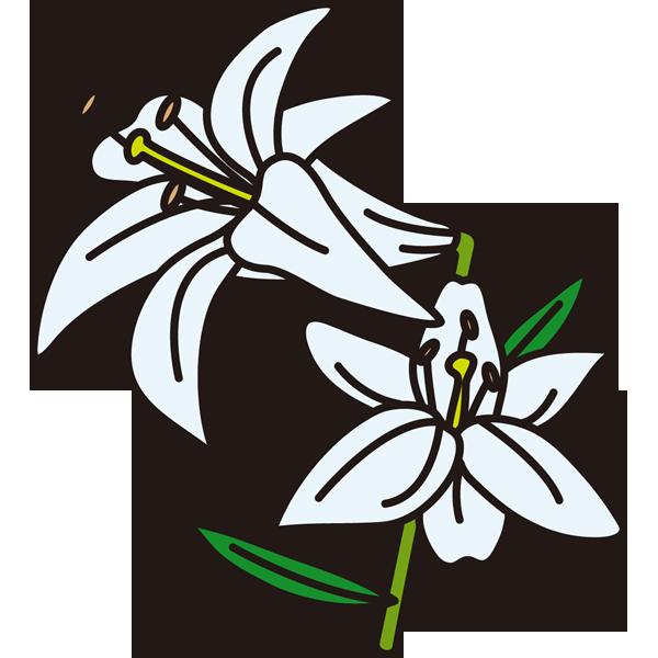 植物 ゆり(カラー)
