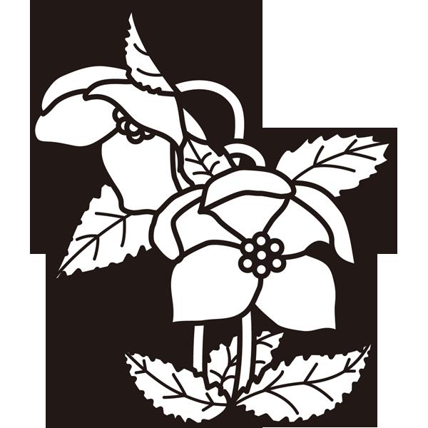 植物 クリスマスローズ(モノクロ)