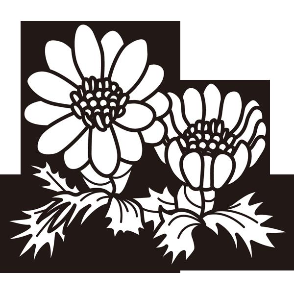植物 福寿草(モノクロ)