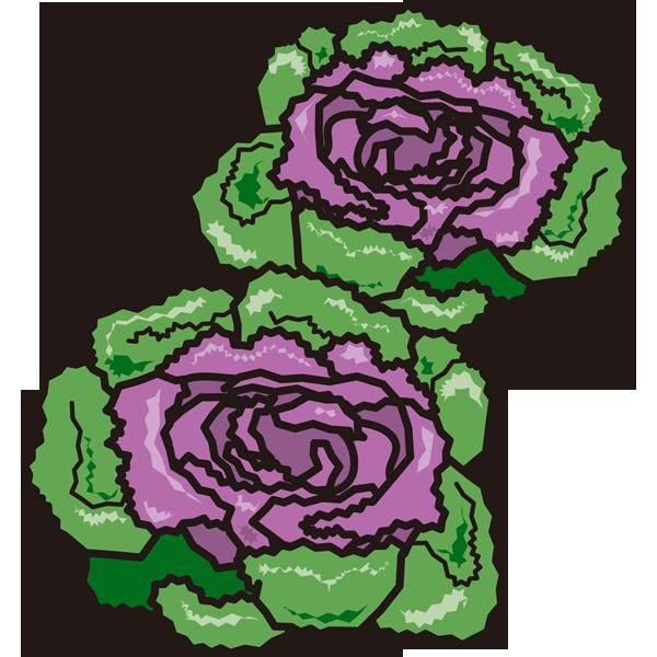 植物 ハボタン(カラー)