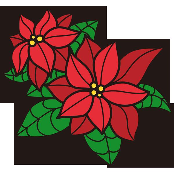 植物 ポインセチア(カラー)