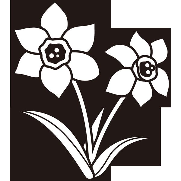植物 スイセン(モノクロ)