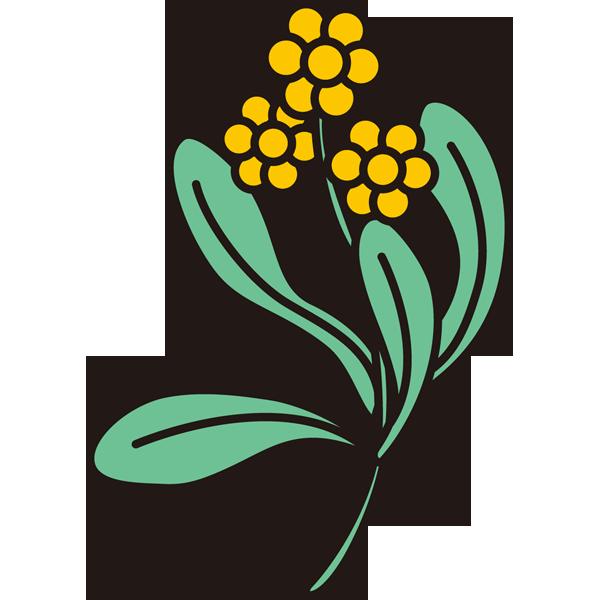 植物 ごぎょう(黄色)(カラー)