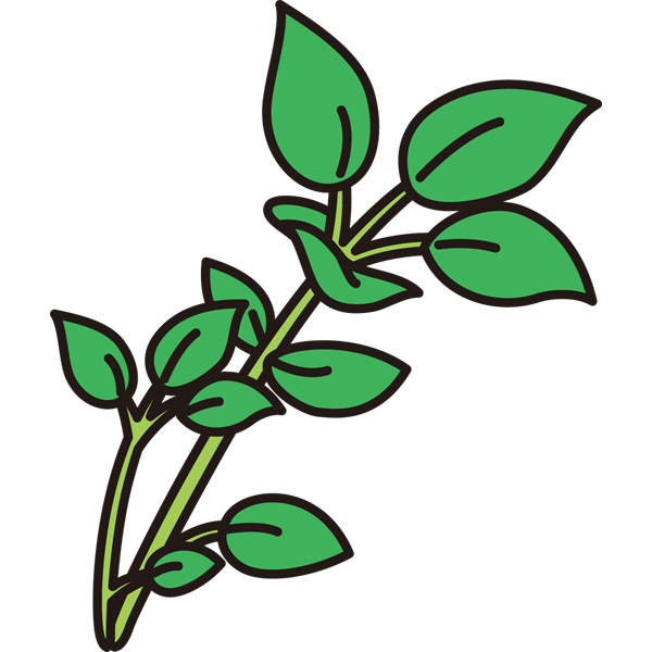 植物 はこべら(カラー)