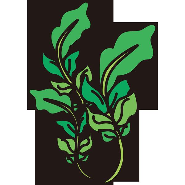 植物 ナズナ(カラー)