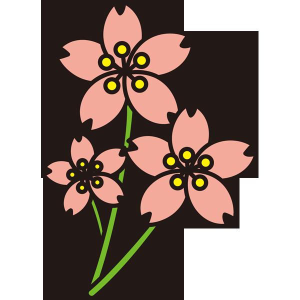 植物 桜(さくら)(カラー)