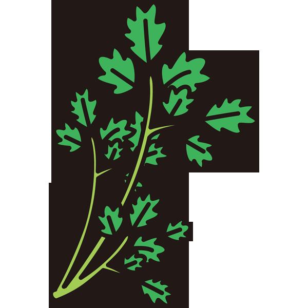 植物 セリ(カラー)