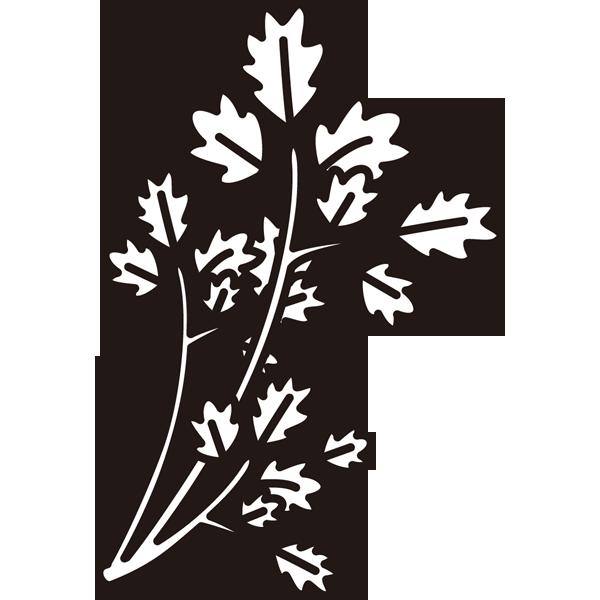 植物 セリ(モノクロ)