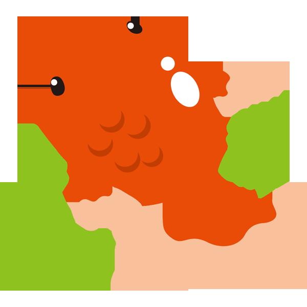 年中行事 金魚(カラー)