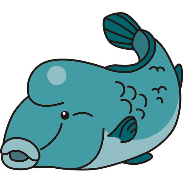 動物 魚(ナポレオンフィッシュ)(カラー)
