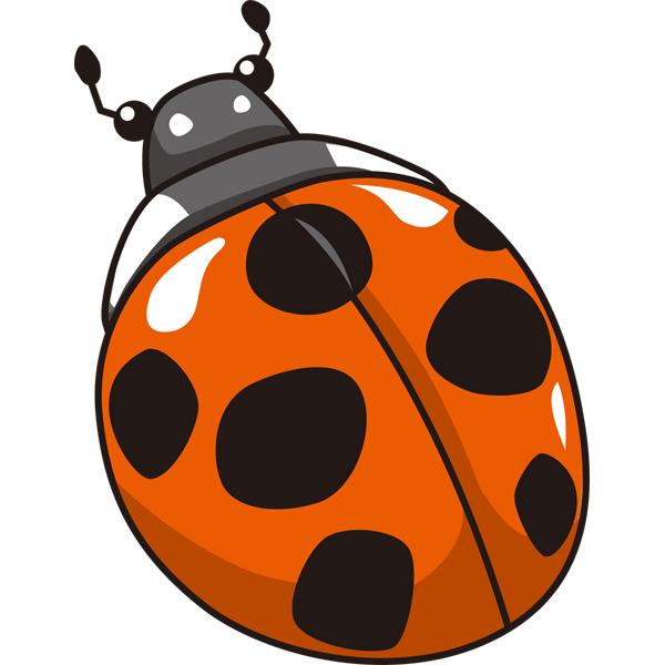 動物 虫(テントウムシ)(カラー)