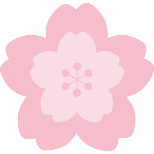 桜の花 ピンク色