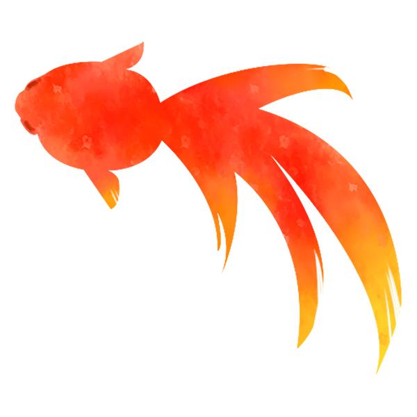 金魚(水彩・夏・赤)