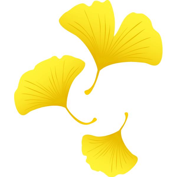 イチョウの葉っぱ(複数)