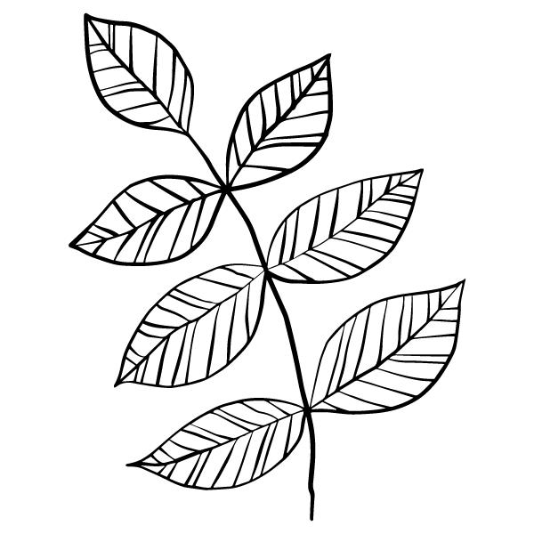 植物 枝葉(モノクロ)